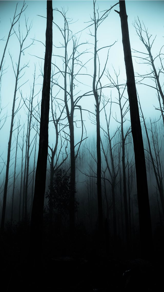 leafless trees on forest during dark sky iPhone wallpaper