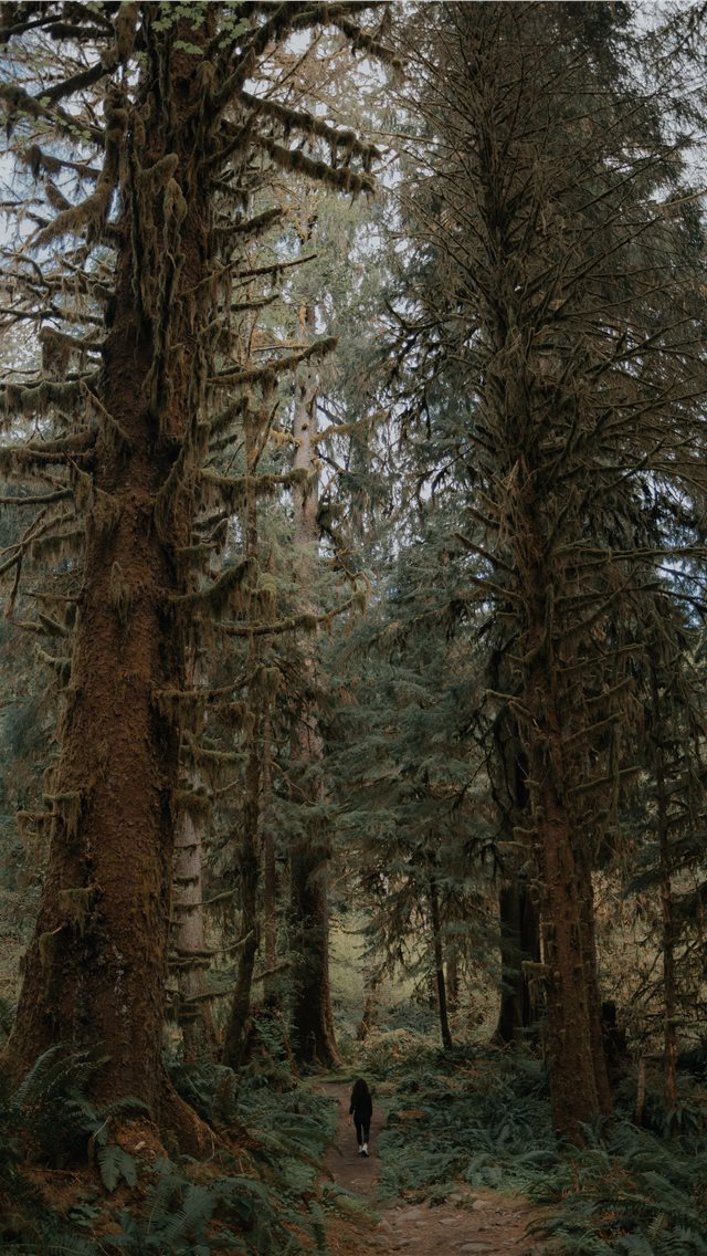 green trees iPhone wallpaper