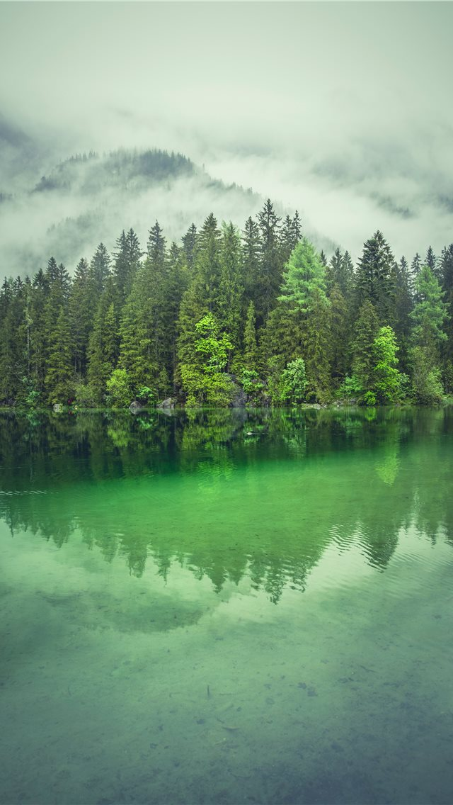 tall trees near river during daytime iPhone wallpaper