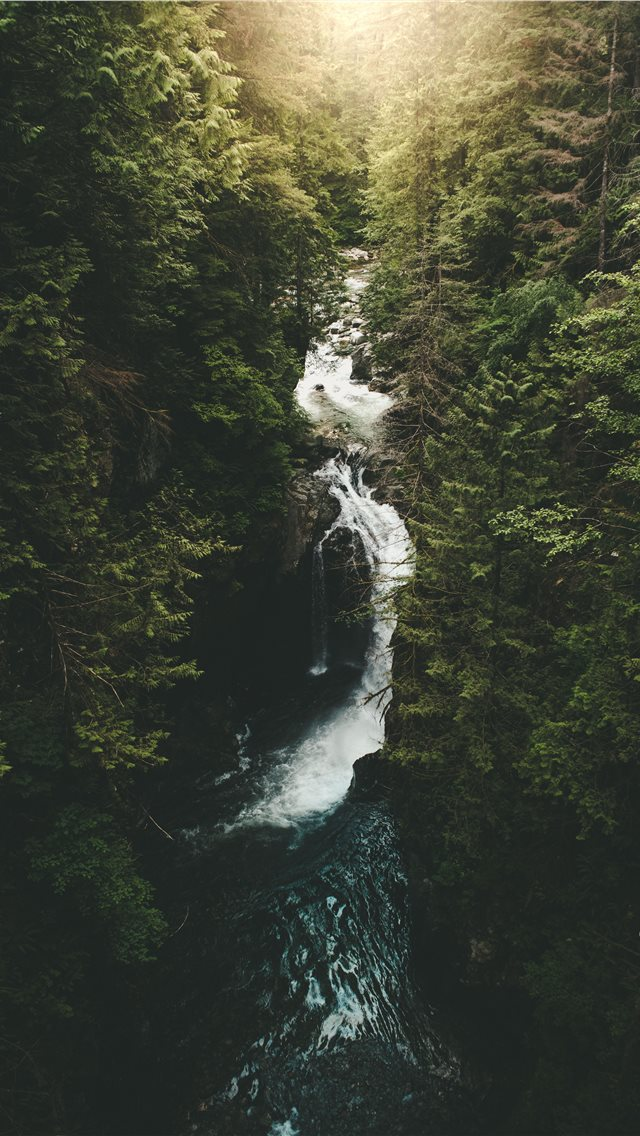 river surrounded by trees iPhone wallpaper