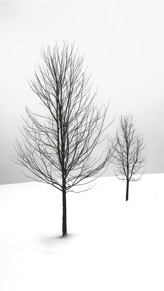 selective focus photography of bare tree iPhone wallpaper