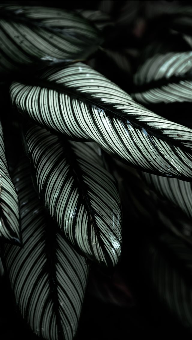 gray and black leafed plants iPhone wallpaper