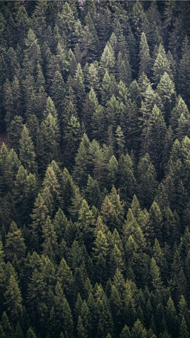 forest during day iPhone wallpaper