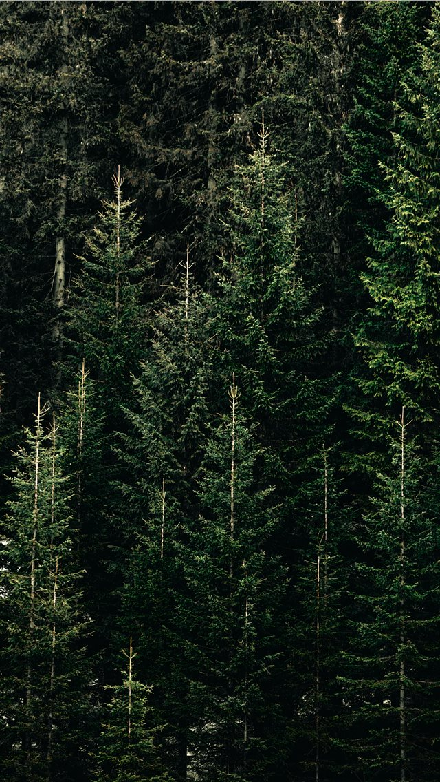 green forest with pine trees iPhone wallpaper