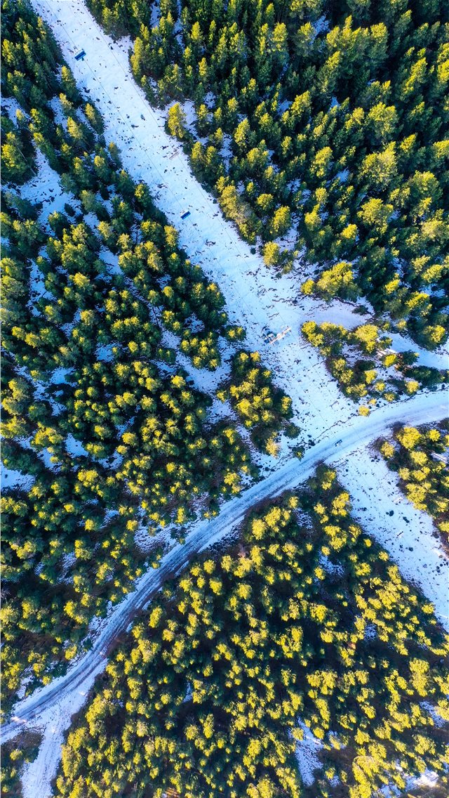 aerial photography of green trees surrounding road... iPhone wallpaper