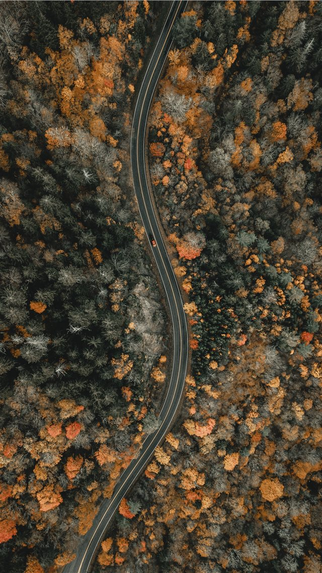 aerial view of trees during daytime iPhone wallpaper