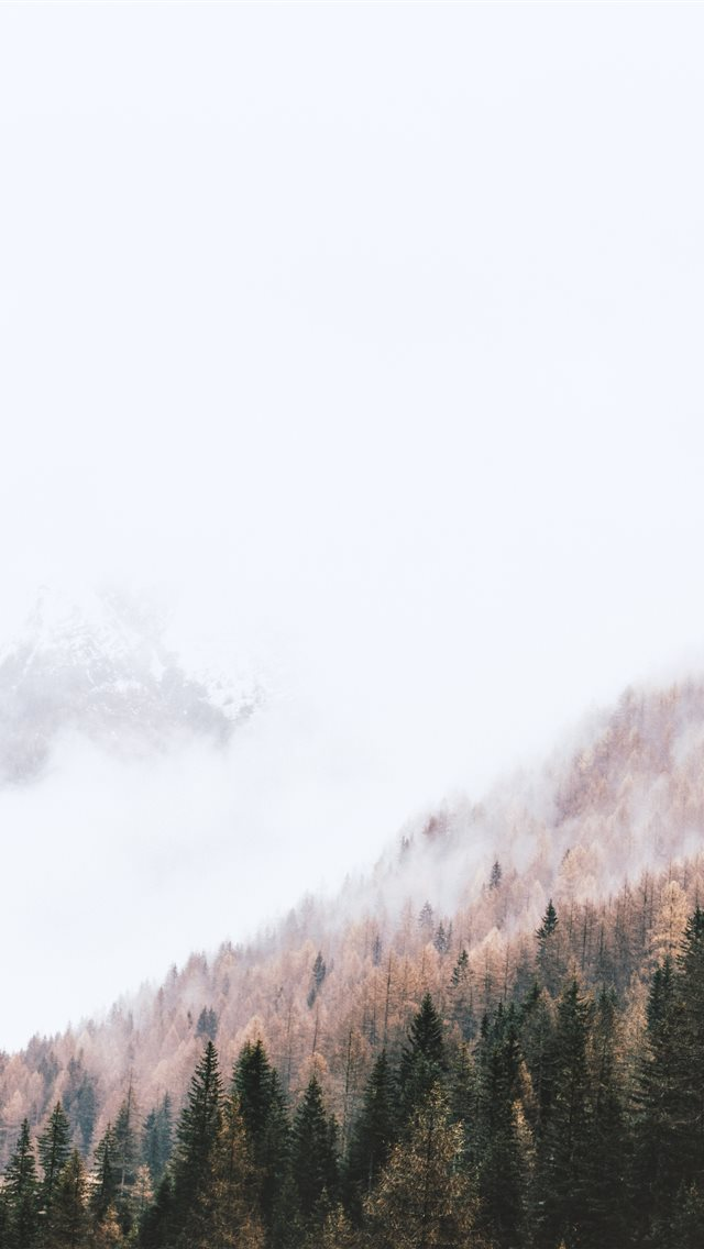 high angle photography of pine trees iPhone wallpaper