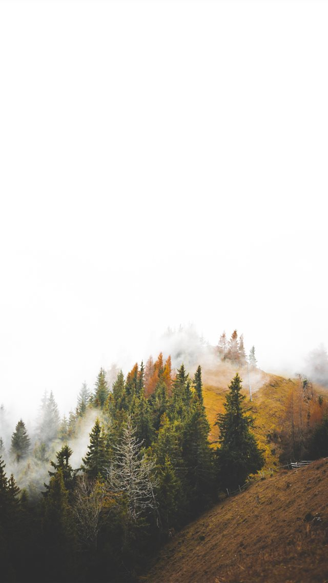 birds eye photography of forest under clouds iPhone wallpaper