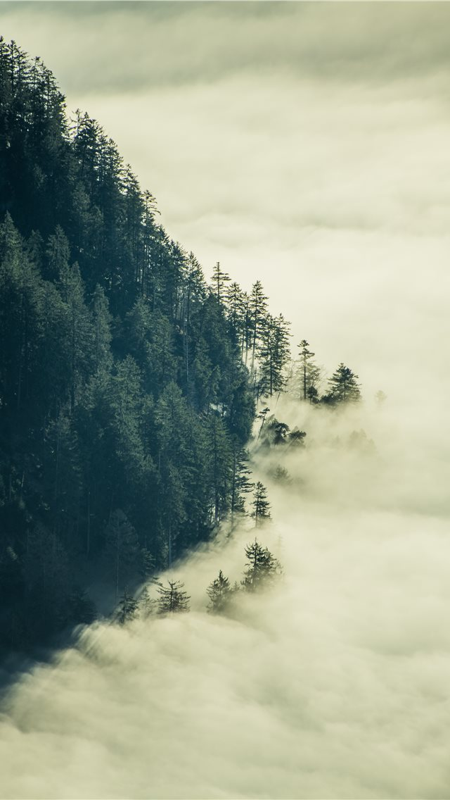 green tress with fogs iPhone wallpaper