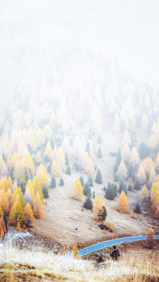 trees during daytime iPhone wallpaper