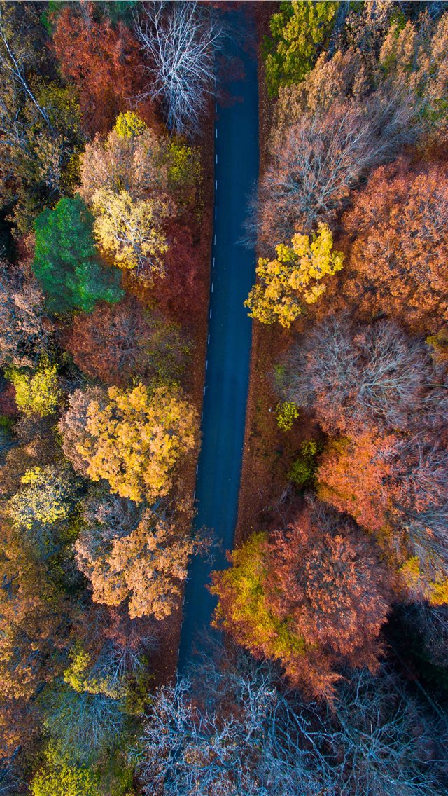 aerial photography of road surrounded with orange ... iPhone wallpaper