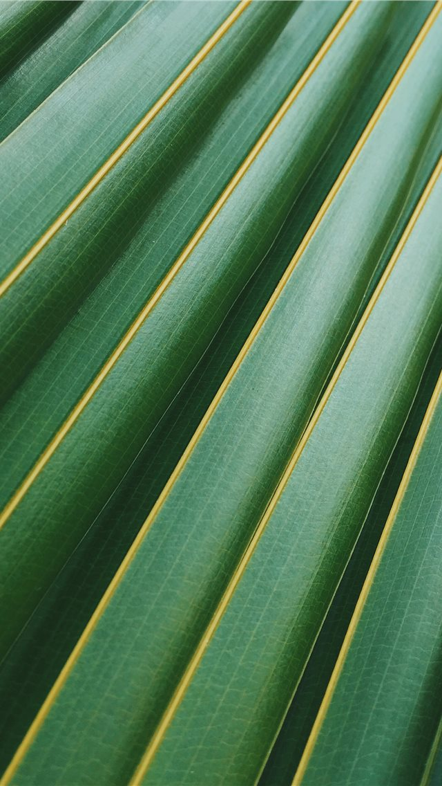 coconut leaf iPhone wallpaper