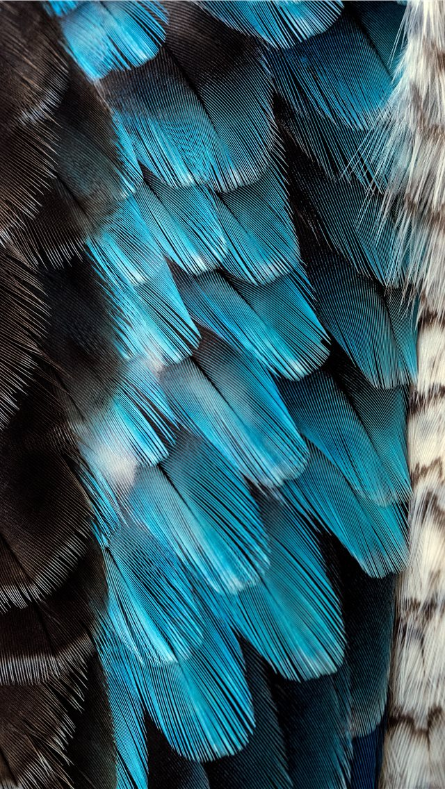 black and blue feather iPhone wallpaper