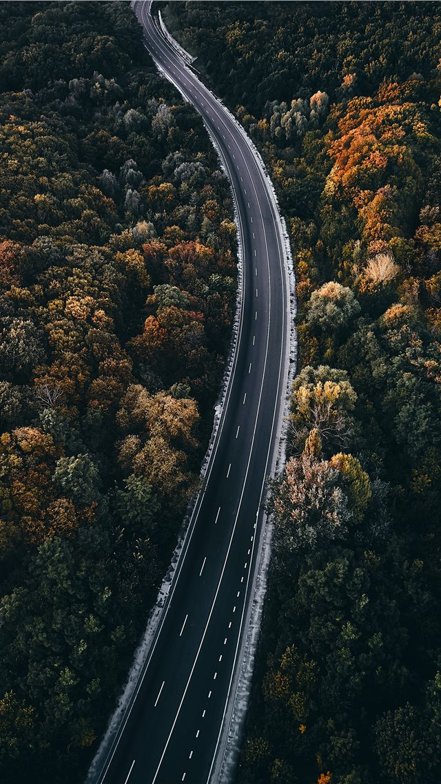 aerial photography of road between trees iPhone wallpaper