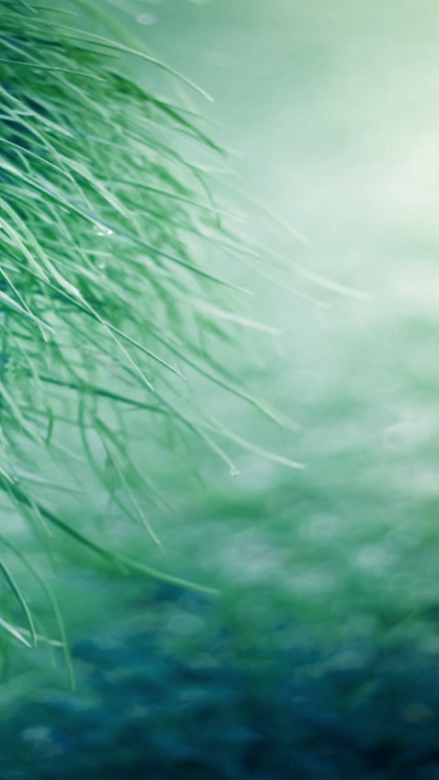 Pure Grass Iphone Wallpapers Free Download