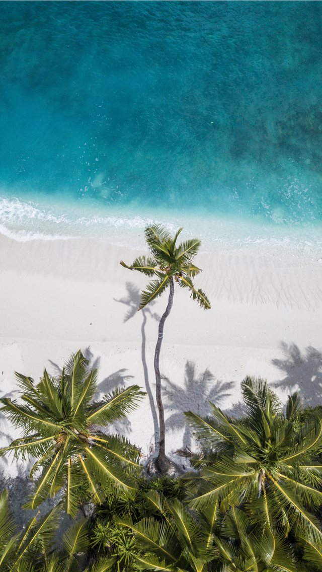 coconut trees near shore iPhone wallpaper