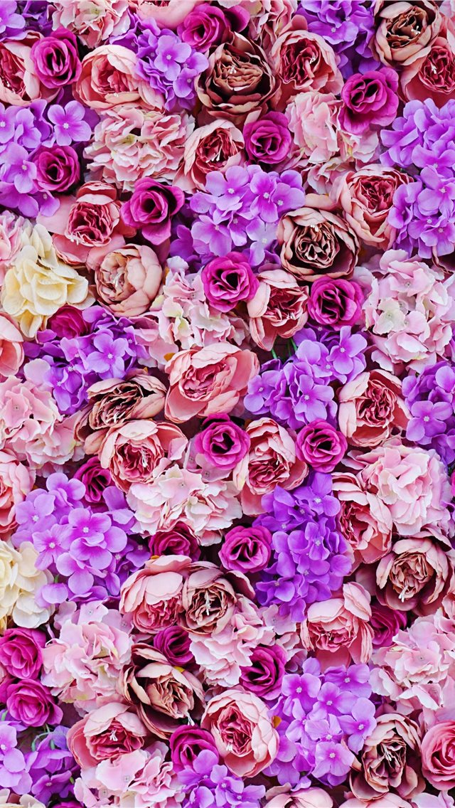 pink and purple petaled flower iPhone wallpaper