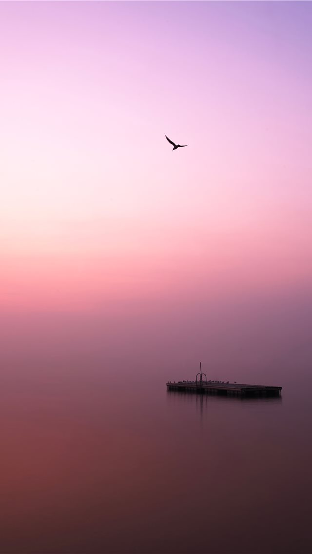 bird flying over body of water during daytime iPhone wallpaper