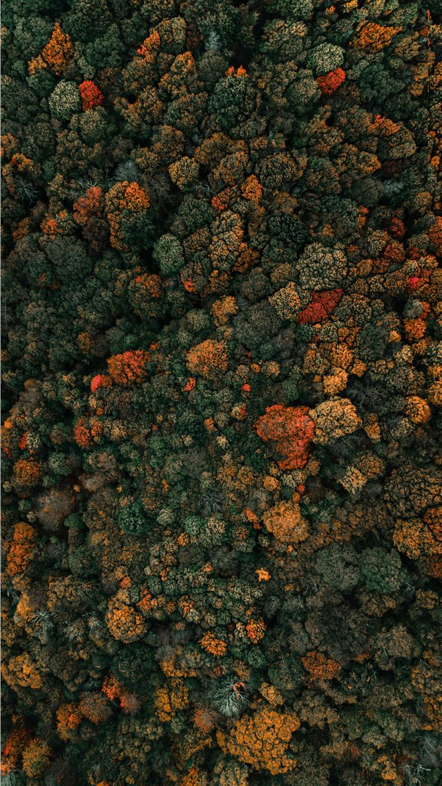 aerial photography of green leafed trees iPhone wallpaper