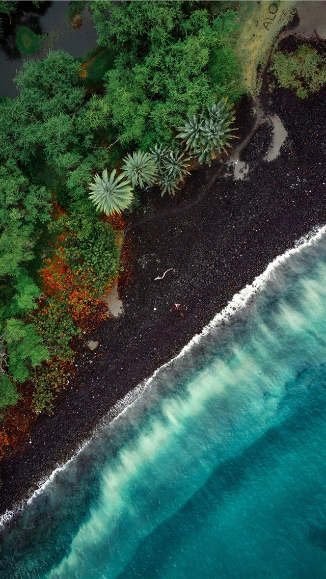 aerial view of green trees beside body of water du... iPhone wallpaper
