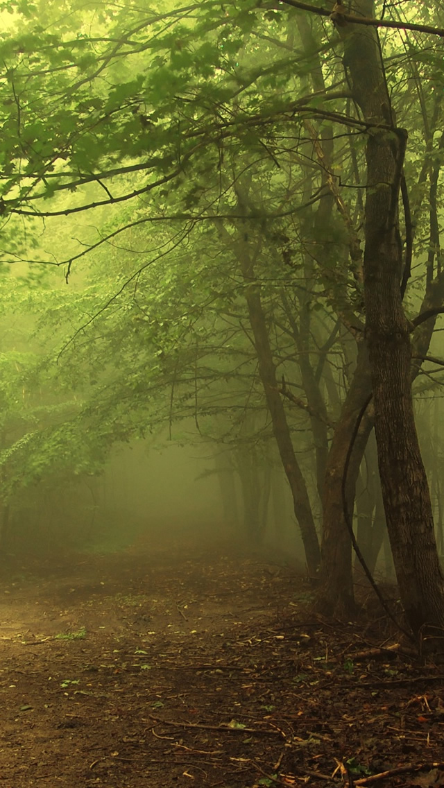 Dark Forest 3 Iphone Wallpapers Free Download