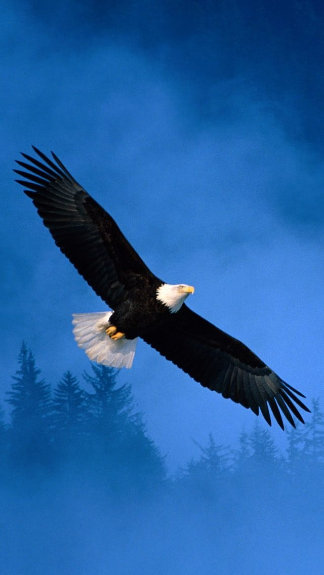 Flight Of Freedom Bald Eagle iPhone wallpaper