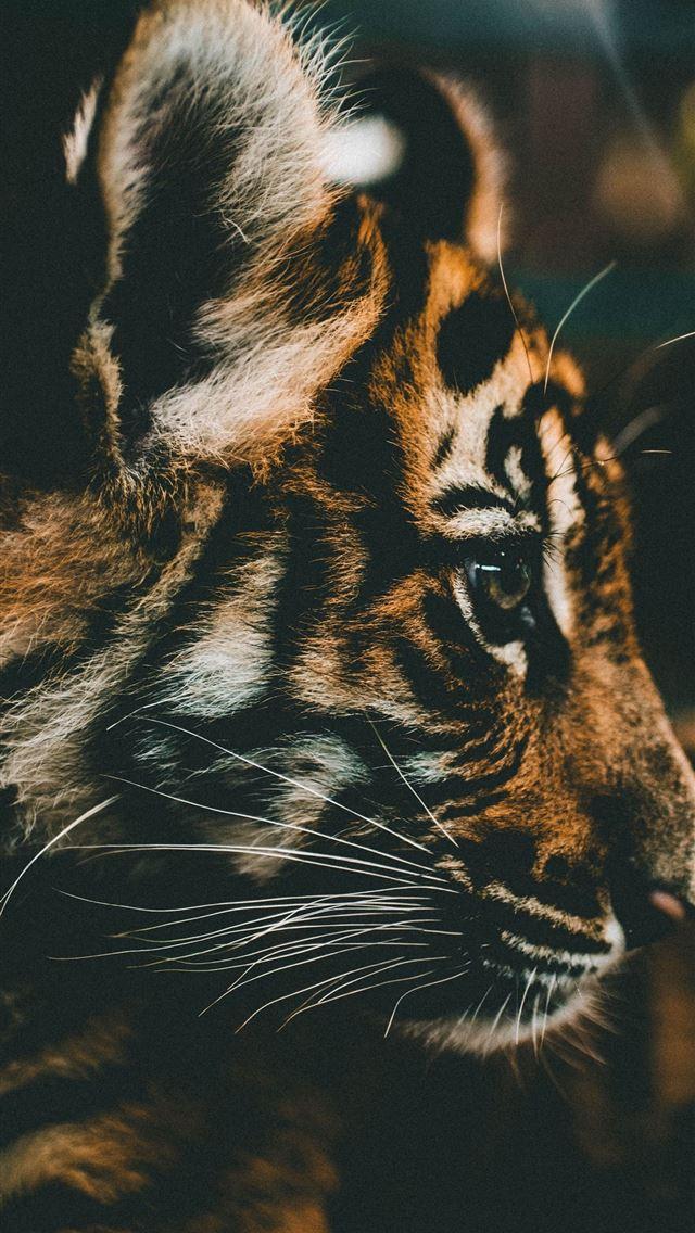 Best Tiger Woods Iphone Wallpapers Hd Ilikewallpaper