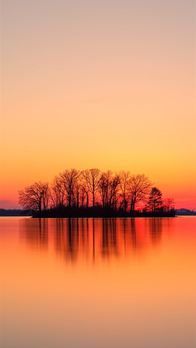 silhouette of trees near body of water during suns... iPhone wallpaper