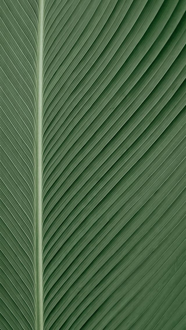 green and white striped textile iPhone wallpaper
