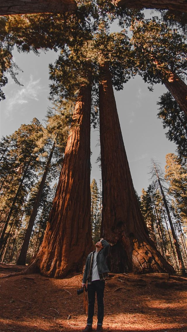 low angle photography of person standing on forest iPhone wallpaper