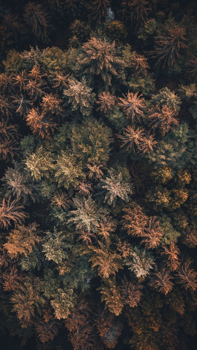 bird's eye view of trees iPhone wallpaper