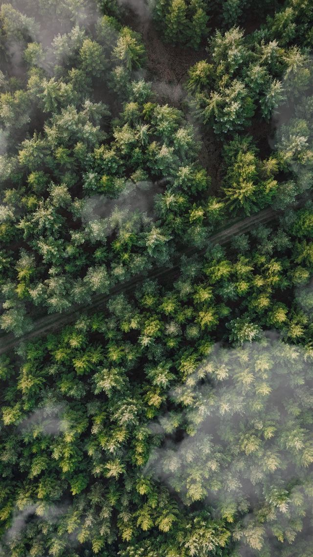 green leafed trees iPhone wallpaper