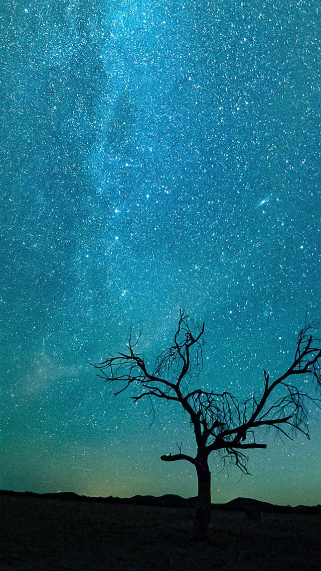 bare tree under starry night iPhone wallpaper
