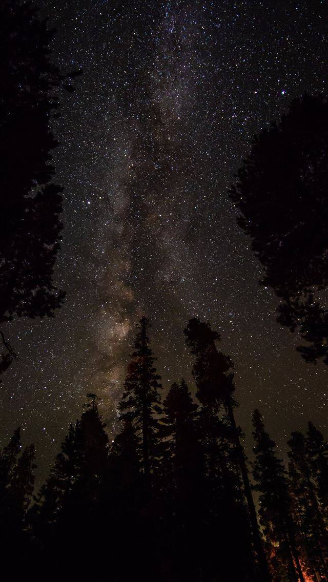 silhouette of pine trees under clear night sky iPhone wallpaper