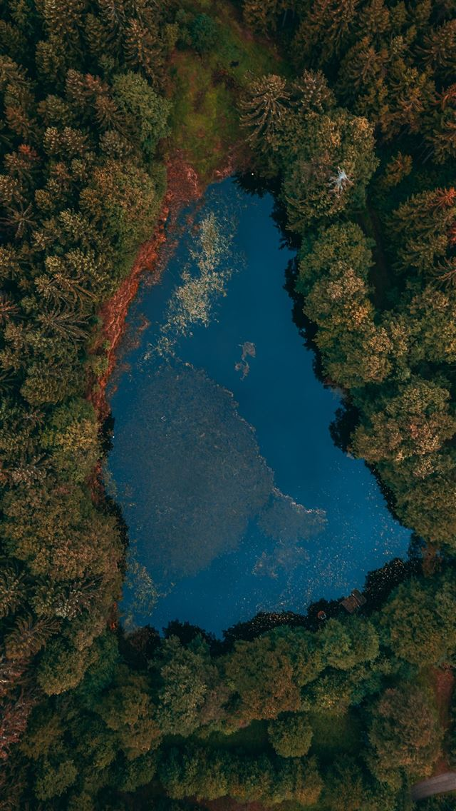aerial view of lake surrounded by trees iPhone wallpaper