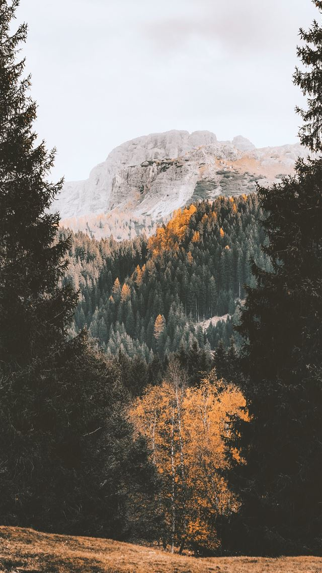 green trees near mountain during daytime iPhone wallpaper