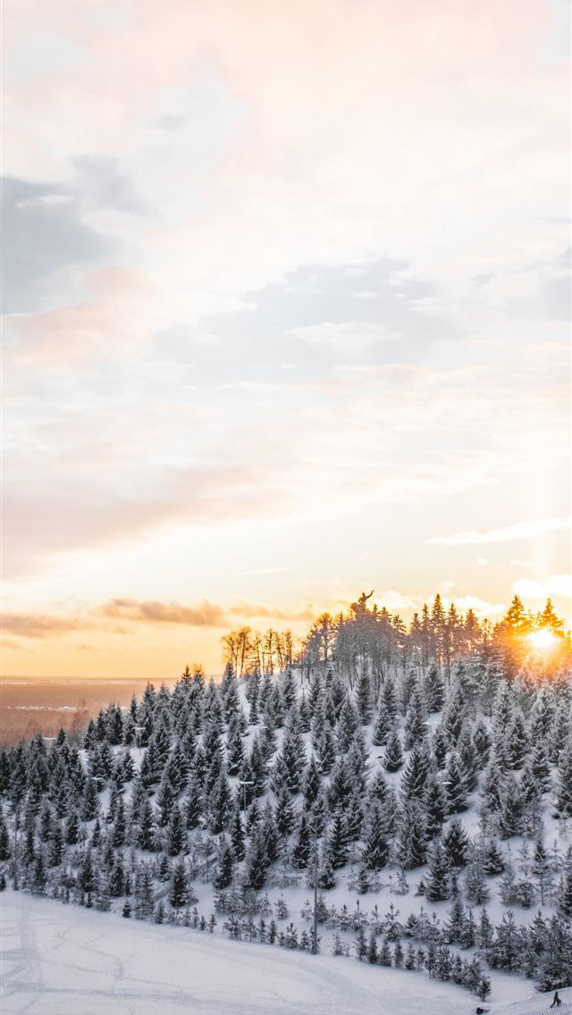 aerial photography of trees covered with snow iPhone wallpaper