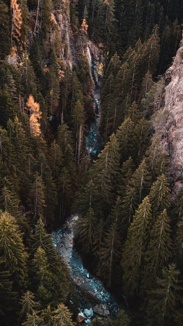river traversing forest during daytime iPhone wallpaper