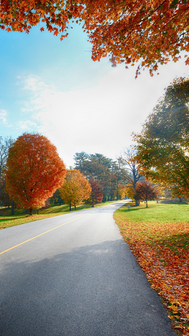 Autumn Tree Road Landscape Iphone Wallpapers Free Download