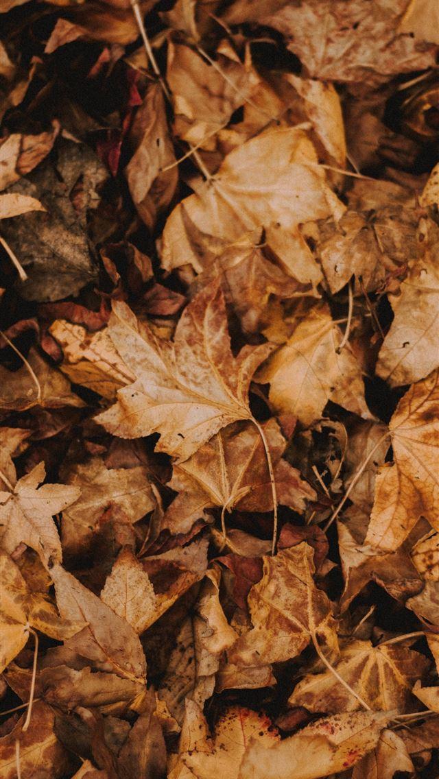 brown leaves iphone wallpaper ilikewallpaper com