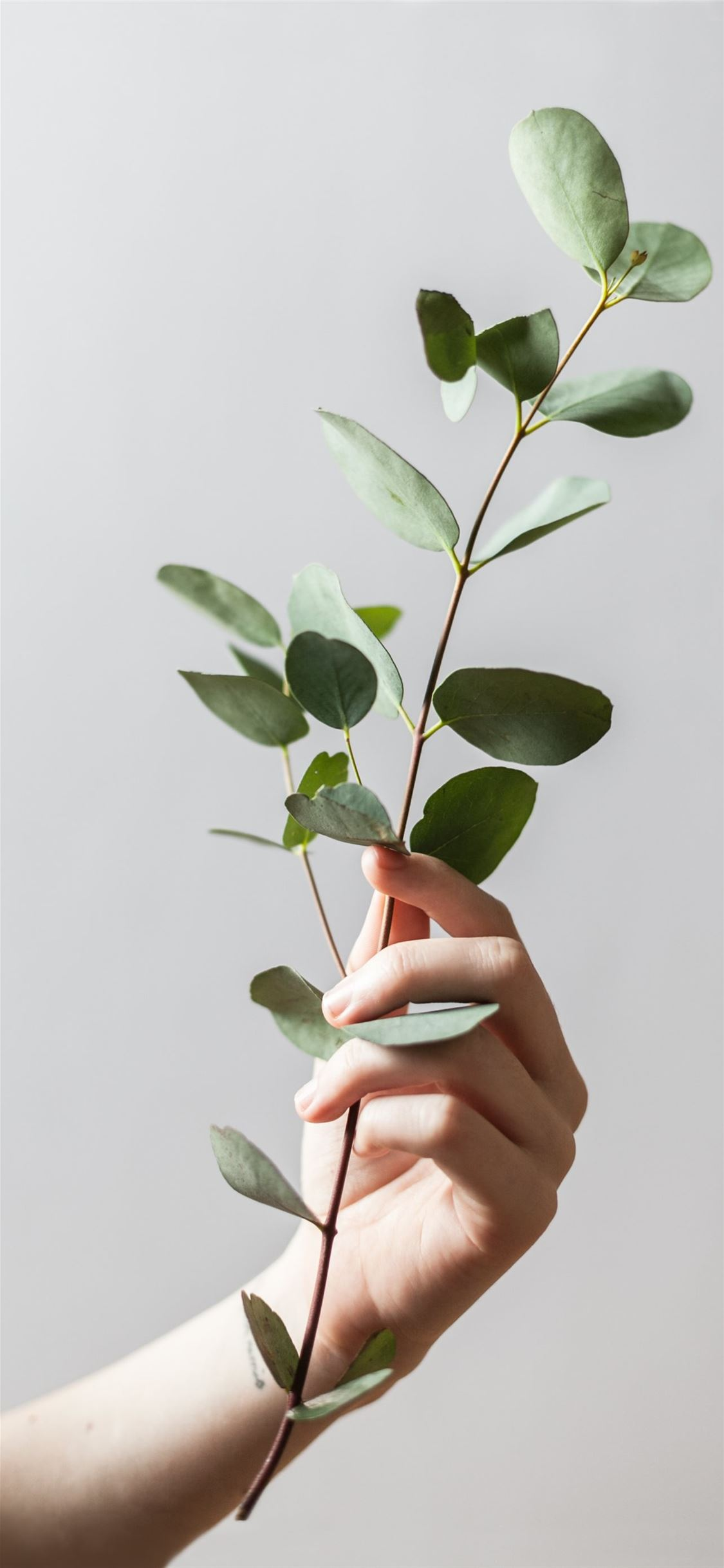 person holding leaf plant iPhone X wallpaper