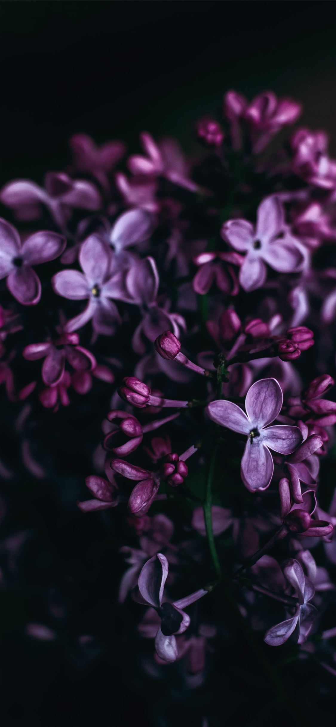 purple flowers iPhone X wallpaper