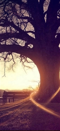 Autumn Bench Sunset Wither Tree iPhone X wallpaper