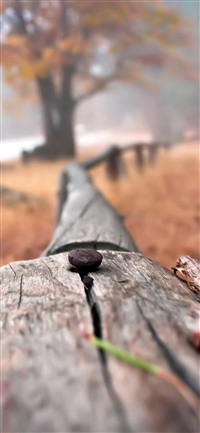 Nail On Wooden Fenece Bokeh Blur iPhone X wallpaper