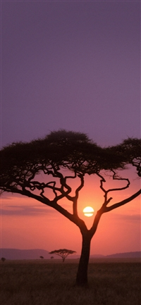 Solo Tree Safari Africa Sunset iPhone X wallpaper