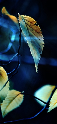 Fall Tree Flower Leaf Sorrow iPhone X wallpaper