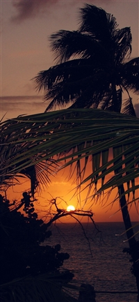 Beach Sunset Sea Tree Nature Holiday iPhone X wallpaper
