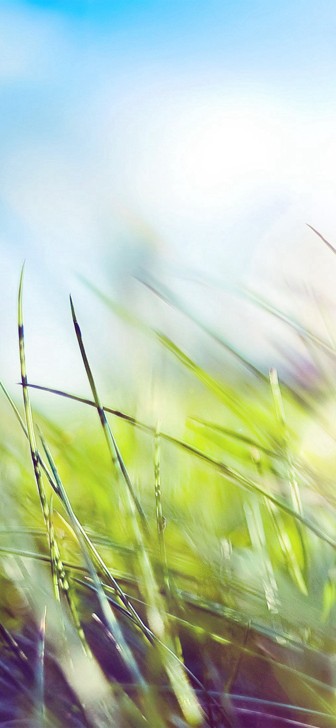 Nature Green Grass Bokeh Summer Flare Iphone X Wallpapers