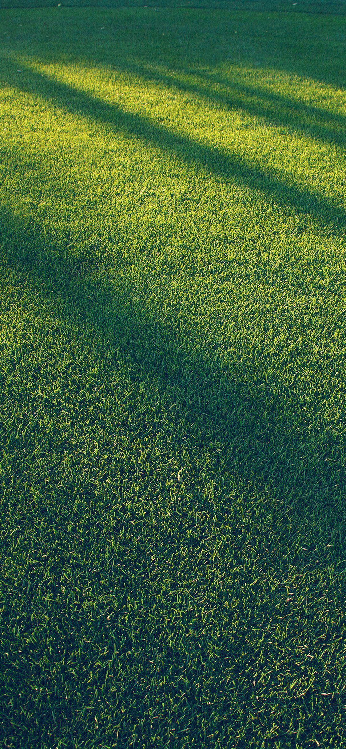 Lawn Grass Sunlight Green Blue Pattern Iphone X Wallpapers