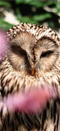 Best Owl Iphone X Wallpapers Hd Ilikewallpaper
